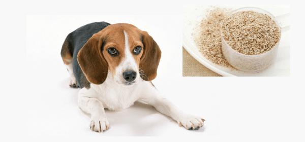 indijski trpotec za pse z obcutljivo prebavo