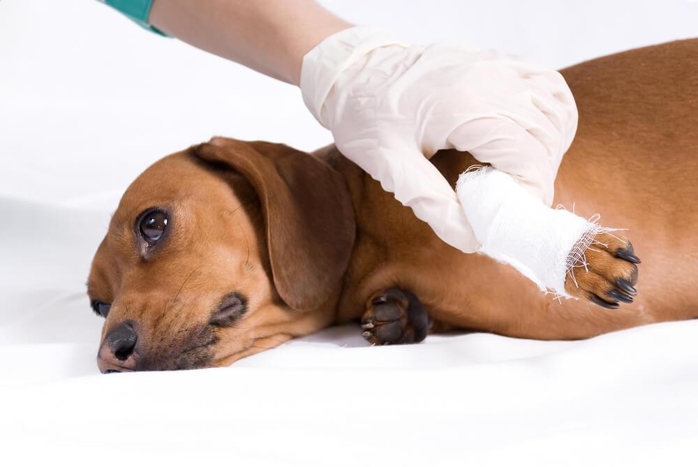 veterina pomoč živalim